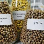 Минсельхоз одобряет ввоз в Россию генно-модифицирванной сои