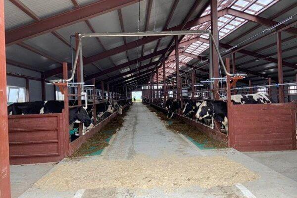 В Кировской области компания «Шахунское молоко» проводит реконструкцию своих ферм