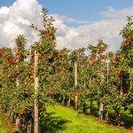 В Липецкой области расширяют площади садов и ягодников