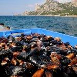 В Крыму планируют строительство промышленной аквафермы