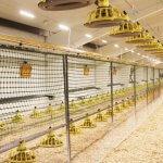 В Костромской области строятся новые птичники