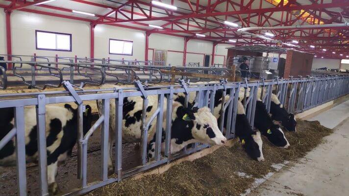 Животноводческие предприятия Удмуртии расширяют производство