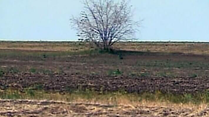 В Астраханской области свыше полутора тысяч гектаров сенокосных угодий пересохли из-за жары