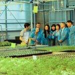 Тепличный комплекс «Саюри» в Якутии планирует в десятки раз увеличить производство свежих овощей
