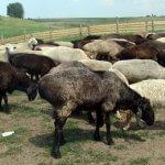 В Приморском крае активно развивается птицеводство и животноводческая отрасль