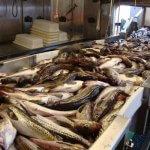 В Калужской области планируется строительство завода по переработке рыбы