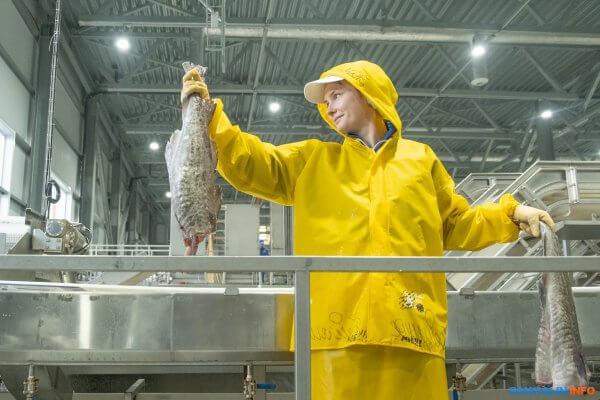 На острове Кунашир открылся новый рыбоперерабатывающий завод
