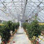 В Магаданской области по голландской технологии строится тепличный комплекс