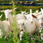 Фермеру из Подмосковья выделят свыше 600 гектаров  сельхозугодий