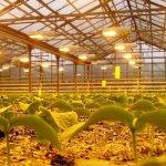 В Волгоградской области введен в эксплуатацию новый тепличный комплекс