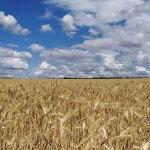 Агрохолдинг «Плодородие» планирует строительство производственного комплекса в Саратовской области