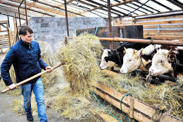 В Республике Коми фермер завершил строительство новой фермы