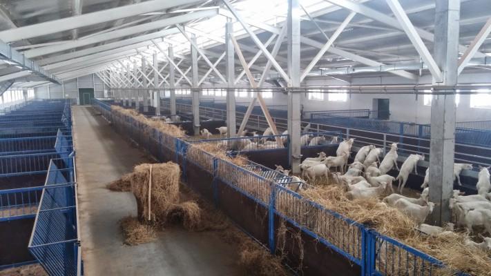 В Московской области планируется создание крупной козьей фермы