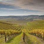 В Севастополе закладывают новые виноградные плантации