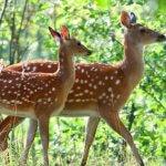 В Волгоградской области начали разводить пятнистых оленей