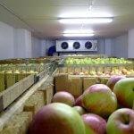 В Краснодарском крае появилось новое плодохранилище