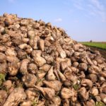 Компания «Авангард-Агро-Курск» оштрафована за причинение вреда почве