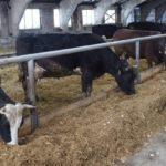 В Кайбицком районе Татарстана предполагается строительство крупного животноводческого комплекса