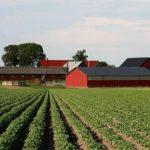Более четверти миллиарда рублей получили от государства сельхозпроизводители Крыма в прошлом году в виде субсидий