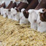 В Удмуртии ввели в эксплуатацию уникальный центр по производству кормов