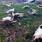 Сельскохозяйственное предприятие Кемеровской области оштрафовано на крупную сумму