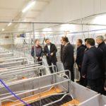 Компания « Агроэко» ввела в эксплуатацию новую производственную площадку по выращиванию свиней