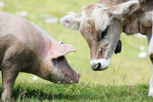 Новое в ветеринарном законодательстве для животноводов