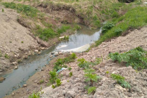 На Сахалине начали модернизацию очистных сооружений свиноводческих комплексов