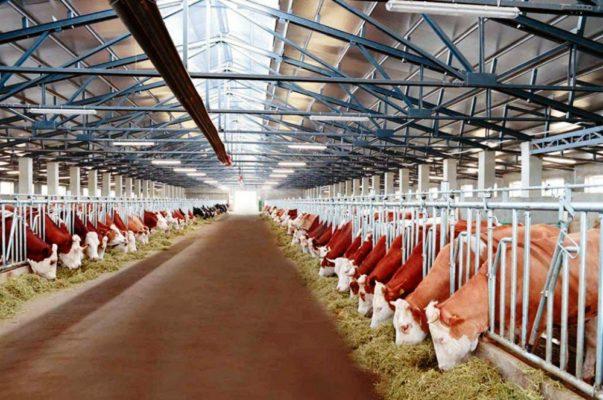Современный подход к молочному животноводству в Башкирии