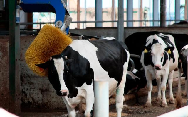 В Удмуртии в этом году появится больше роботизированных товарно-молочных ферм