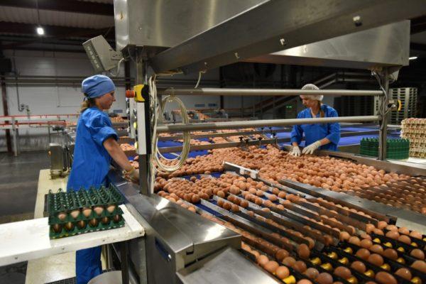 Почему в Магадане подорожали яйца Дукчинской птицефабрики