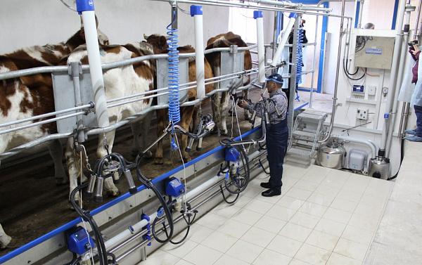 В республике Бурятия увеличивают производство молока