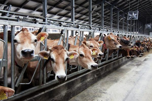 В Пермской области появится крупная современная молочно-товарная ферма