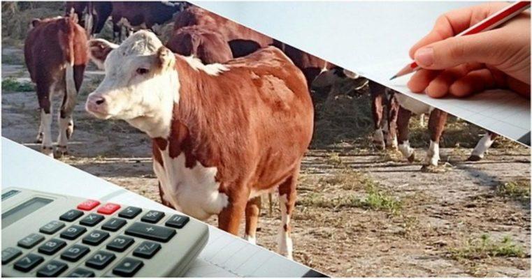 В Кемеровской области отменили выплату двух субсидий для животноводов