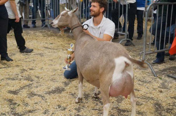 Ярославский холдинг «АгриВолга» взял курс на производство органической продукции из молока коз