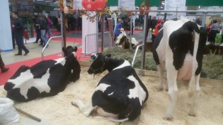 В Республике Татарстан в начале июля состоится выставка племенного скота «Агроволга»