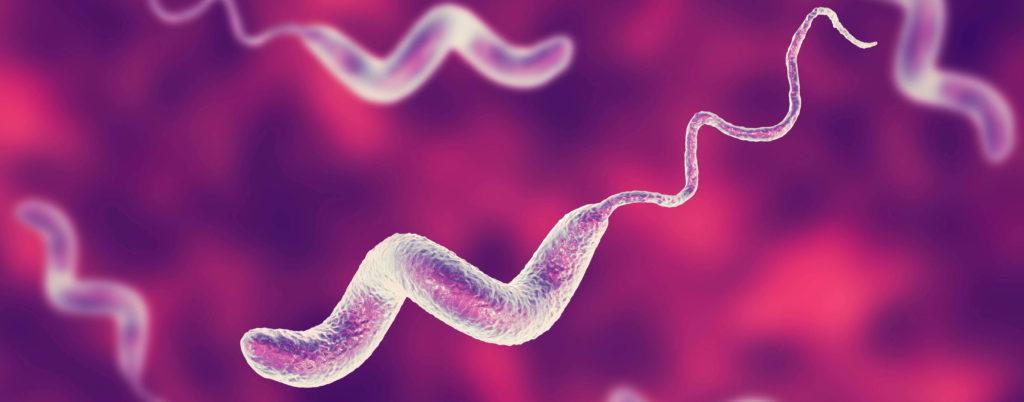 Бактерии Campylobacter jejuni.