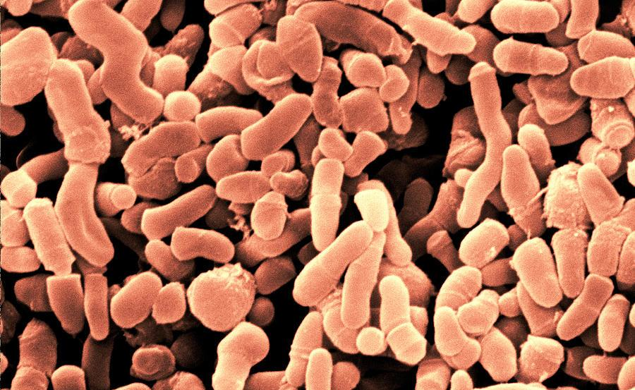 Бактерия Propionibacterium Acnes