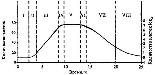 Динамика развития бактериальной популяции в периодической культуре